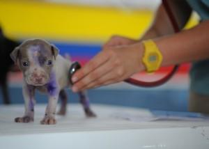 primeira consulta cão
