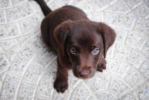 Importância do treino do cão nos primeiros meses