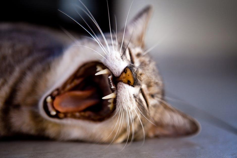 Comportamentos e estados emocionais dos gatos