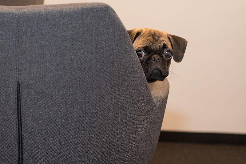 Gel oral diminui ansiedade em cães