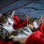 Parasitas em gatos