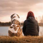 Animais refletem estados emocionais dos donos?