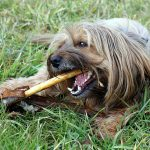 Higiene oral para cães