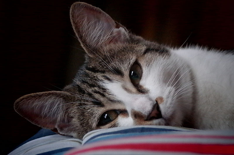 6 livros para apaixonados por gatos