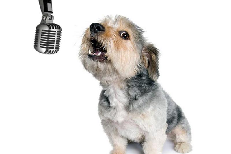 Os cães também gostam de jazz