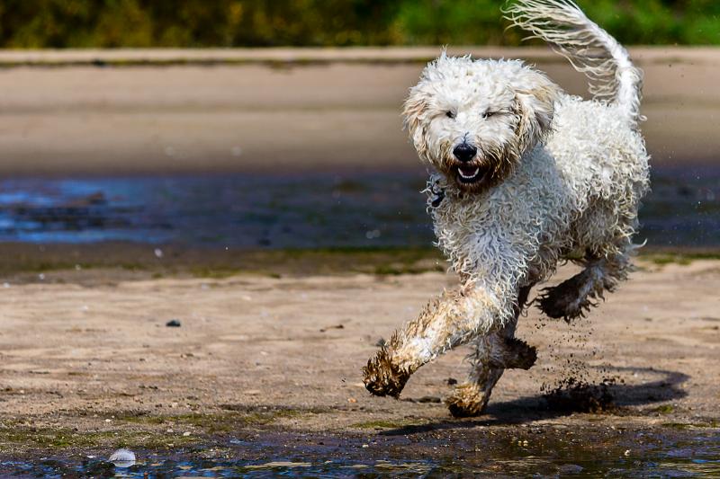 Cães também se viciam na corrida