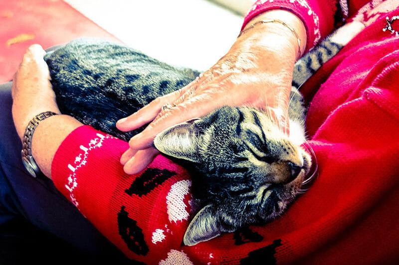 Gatos são sensíveis às emoções dos seus donos